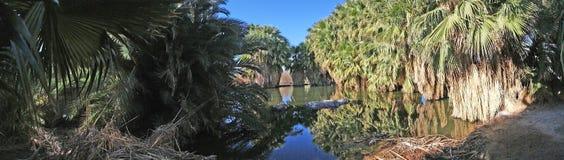 Gömma i handflatan oasen - panorama Royaltyfria Foton