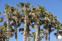 Gömma i handflatan och blå himmel i den Torrox costaen, MÃ-¡ lagaen Spanien Royaltyfri Foto