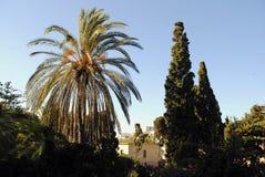 Gömma i handflatan och cypressträd på solnedgången Royaltyfri Bild