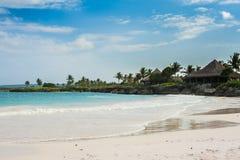 Gömma i handflatan och den tropiska stranden i tropiskt paradis. Sommartid som är holyday i Dominikanska republiken, Seychellerna  Royaltyfri Fotografi