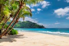 Gömma i handflatan och den tropiska stranden med vit sand royaltyfri foto