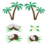 Gömma i handflatan och kokosnötter Royaltyfria Foton