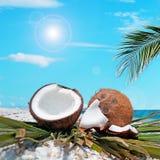 Gömma i handflatan och kokosnötter under solen Royaltyfri Fotografi