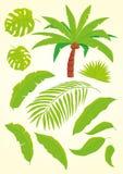 Gömma i handflatan och palmblad Arkivfoton