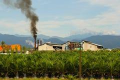 Gömma i handflatan oljafabriken, Sumatra Indonesien Royaltyfri Fotografi