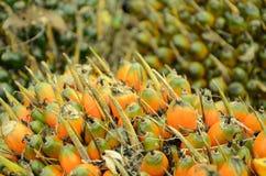 Gömma i handflatan olje- frukt Arkivfoton