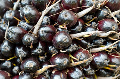 Gömma i handflatan olje- frukt Royaltyfri Bild