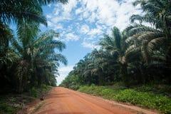 Gömma i handflatan olje- frukter Fotografering för Bildbyråer