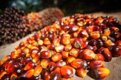 Gömma i handflatan olje- frukter Arkivfoto