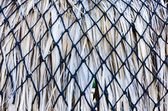 Gömma i handflatan ormbunksbladet halmtäckte taket Arkivbild