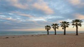 Gömma i handflatan på stranden Royaltyfri Bild