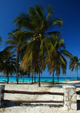 gömma i handflatan palmaceaetreen Arkivfoto