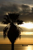 gömma i handflatan silhouettetreen Royaltyfria Bilder