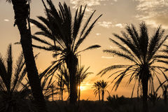 gömma i handflatan silhouettetreen Skymning på Alicante, Spanien Arkivbild