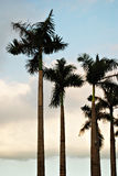 gömma i handflatan silhouettetrees Royaltyfria Foton