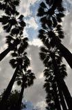 gömma i handflatan silhouettetrees Royaltyfri Foto