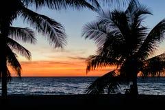 gömma i handflatan silhouettetrees Färgrikt himmelpanelljus för solnedgång i Asien Arkivbild
