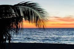 gömma i handflatan silhouettetrees Färgrikt himmelpanelljus för solnedgång i Asien Royaltyfria Bilder