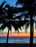 gömma i handflatan silhouettetrees Färgrikt himmelpanelljus för solnedgång i Asien Fotografering för Bildbyråer