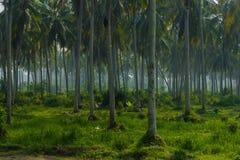 Gömma i handflatan skogen Arkivbild