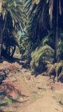 Gömma i handflatan skogen Fotografering för Bildbyråer