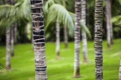Gömma i handflatan skogen i Tenerife Royaltyfri Foto