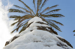 Gömma i handflatan snöig Arkivbild