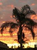 gömma i handflatan solnedgångtreen Royaltyfria Foton