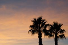 gömma i handflatan solnedgångtrees Arkivbilder