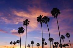 gömma i handflatan solnedgångtrees Arkivbild