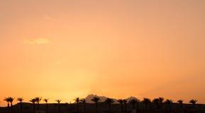 gömma i handflatan solnedgångtrees Royaltyfri Bild