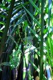 Gömma i handflatan träd för skogen för skoggräsplan fuktiga royaltyfri bild