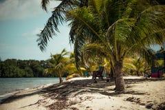 Gömma i handflatan träd i tropikerna Arkivbilder