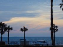 Gömma i handflatan träd och rosa himmel på den Texas kusten arkivbild