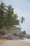 Gömma i handflatan träd på kusten Arkivfoton
