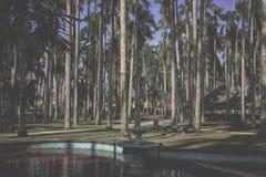 Gömma i handflatan trädgården, Paramaribo, Surinam Fotografering för Bildbyråer