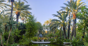 Gömma i handflatan trädgårds- Elche Spanien Royaltyfria Bilder