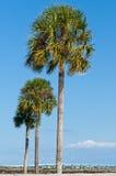 gömma i handflatan tre trees Fotografering för Bildbyråer
