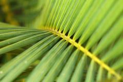 Gömma i handflatan treebladet Royaltyfri Bild