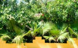 gömma i handflatan tropiska växter Royaltyfri Fotografi