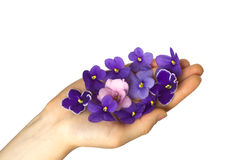 gömma i handflatan violetta petals arkivfoto