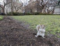 Gömma sig att stå upp i ett New York City parkerar arkivfoton
