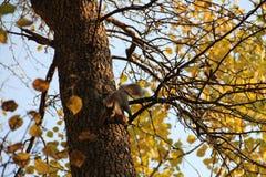 Gömma sig banhoppningen på stammen av ett träd i höst royaltyfria bilder