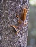Gömma sig på en tree royaltyfria bilder
