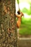 Gömma sig på treen Royaltyfri Bild