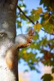 Gömma sig på treen Arkivbild