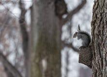 Gömma sig på treen royaltyfria bilder