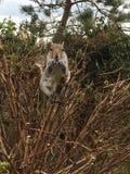 Gömma sig sammanträde på busken i Pavillionen, Brighton Arkivfoton
