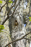 gömma sig treen royaltyfria bilder