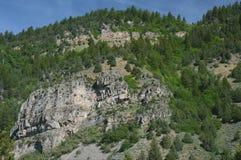 Gömställemedborgare Forest Scenic Highlight Arkivfoto